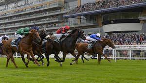 وهي واحدة من أكثر حلبات السباق الرائدة في المملكة المتحدة وتستضيف 9 من سباقات المملكة الـ32 كل سنة.