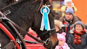 هل تعرفون بوجود قديس للأحصنة.. ويوم ديني لها؟