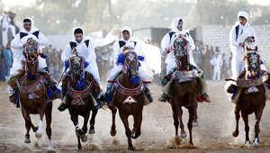 بالصور..الخيول عروس حفلات الزفاف في ليبيا