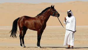 اتحاد الفروسية الإماراتي يدعو فرسانه للانتساب لتمثيل بلادهم بكأس العالم للقفز