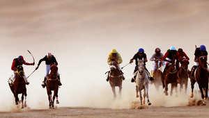 الإمارات تصدر قانون مكافحة المواد المحظورة في الفروسية