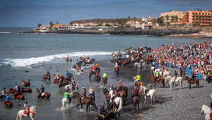 بالصور..الخيول تسبح في جزر الكناري للحماية من الآفات والأمراض