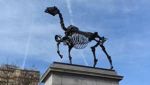 بالصور..حصان في لندن يعرف بيانات السوق مباشرة من البورصة