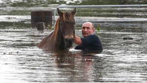 ورطة الخيول بالقرب من دونغونغ، أستراليا 22 أبريل/ نيسان 2015