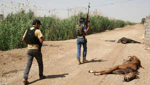 جنديان من القوات العراقية يسيران على طريق في الرمادي على جانبها حيوانات نافقة 26 أبريل/ نيسان 2014
