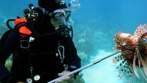"""روبوتات """"قاتلة"""" تحت الماء..لمواجهة أسماك التنين"""