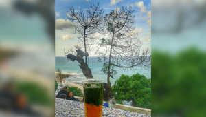 صورة من مقهى في مدينة طنجة - أرسلها محمد رضا
