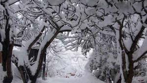 الثلوج في محافظ جرش بالأردن - أرسلها أيهم العتوم