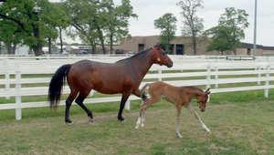 بالصور.. هل سيصل حصان مستنسخ إلى دورة الألعاب الأولمبية؟