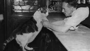 وللقطط مقاهٍ أيضاً..