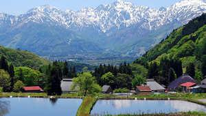 اليابان .. بلاد أشجار الكرز والسعادين المرفهة (الجزء الثالث)