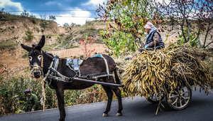 """سيارات كلاسيكية من """"عصر الأجداد"""" تجوب طرقات الصين الريفية والمدنية"""