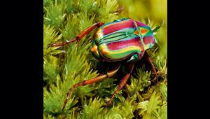 عالم الحشرات