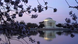 """عاصفة """"رقيقة"""" من الأزهار البيضاء والوردية اللون تغطي شوارع واشنطن"""