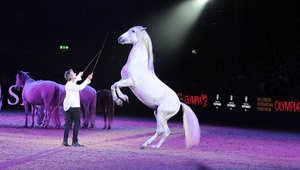 """من هو الموهوب الذي لُقب بـ""""مغناطيس الخيول"""" وعاشقها؟"""