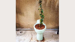 """مراحيض وأحواض استحمام ..تتحول لتحف فنية بديعة في مشروع """"خردة Khordda"""""""