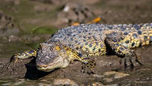 في غابات بروناي الخيالية.. تختبئ أغرب الحيوانات في العالم