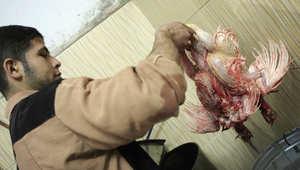 عامل مصري في محل لذبح وتنظيف الدواجن في دمياط - أرشيف 2008