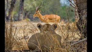 محمية سيلوس.. جوهرة تنزانيا السرية