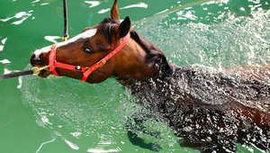 طرق للحفاظ على صحة الأحصنة