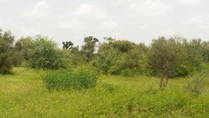"""مشروع """"Great Green Wall"""" أو """"الجدار الأخضر العظيم"""" في أفريقيا"""