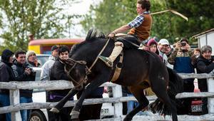 هذه التشيلي.. حيث تقاس شجاعة الفرسان بعناد خيولهم