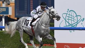 بث مباشر لكأس دبي العالمي للخيول.. السباق الأغنى في العالم