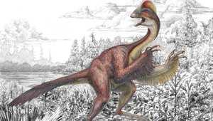 """ديناصور له ريش ولقب بـ""""دجاجة الجحيم"""" وزنه أكثر من 600 باوند"""