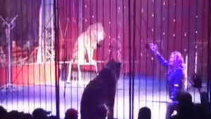 """سد يهاجم مدربته في مصر أثناء رقصها على اغنية """"بشرة خير"""""""