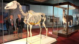 أشهر 10 خيول أسطورية في عالم السباقات