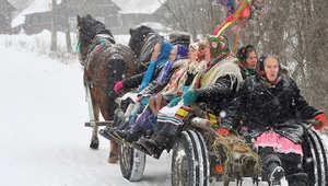 كيف تراقص الكلاب والأحصنة بعضها في روسيا البيضاء؟