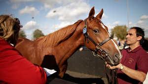 هل تفكر بشراء حصان قريباً؟ اتبع 10 نصائح ضرورية قبل حسم قرارك