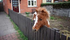 لا تكبح الحصان من فمه