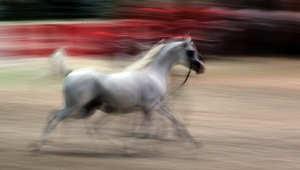 هكذا تُقيم حالة حصانك الجسدية ووزنه المثالي..بعشر دقائق فقط