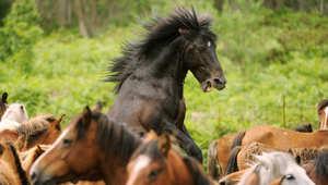 هكذا يقول لك حصانك أنه يشعر بالقلق