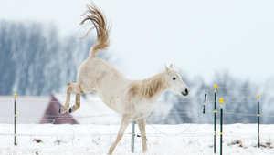 ما هي أهم الخطوات لتجهيز اسطبلات الخيول لمواجهة الكوارث الطبيعية؟