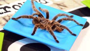 عنكبوت عملاق يتسبب بتأجيل رحلة جوية