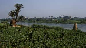 حقول مزوعة على ضفاف نهر الرشيد، وهو فرع من نهر النيل، في محافظة الجيزة شمال القاهرة