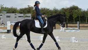 خطوات ضرورية للعناية بالحصان بعد كل تمرين