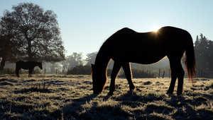 كيف تعتني بحصانك مع تقدمه في العمر؟