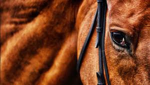 أهم النصائح لبيع حصانك بسرعة وسلالسة