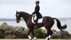 هكذا تحمي حصانك من سرجه
