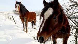 5 أخطاء شائعة يقوم بها أصحاب الخيول شتاء