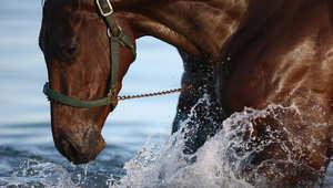 ما هو السبب وراء عصيان الحصان لأوامر فارسه أحياناً؟