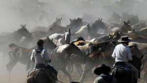 للخيول قيمة كبيرة في قدسية الاحتفالات باسبانيا