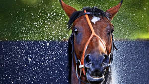 """3 خطوات """"بسيطة"""" وفورية لتدليل الخيول والاهتمام بجمالها"""