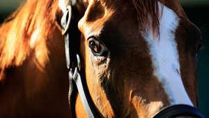 كيف تحمي حصانك من حرارة الصيف خلال السفر؟