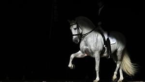 خمس خطوات لجعل حصانك مستعداً لسباقه الأول