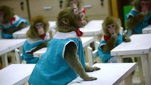 قرد يصرخ على مدرب في مدرسة لتدريب القرود في حديقة للحيوانات بالصين