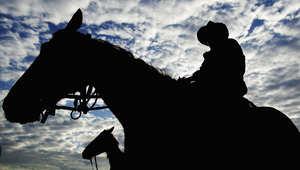 لغة الحصان ليست صعبة بقدر اعتقادك.. هكذا تتعلمها